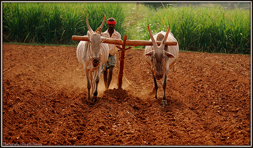 Understanding Agricultural Mechanization and its Prospects in India